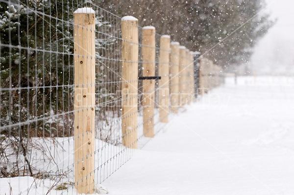 Farm scene in a snowstorm.