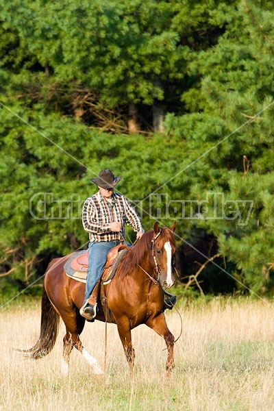 Cowboy Riding Quarter Horse Western Style