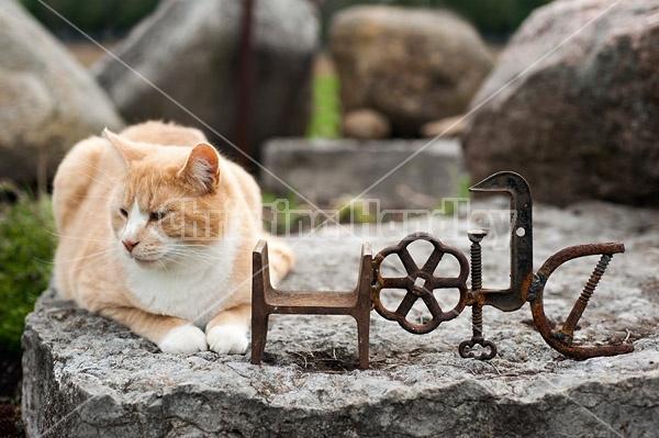 Orange cat and metal hope sign