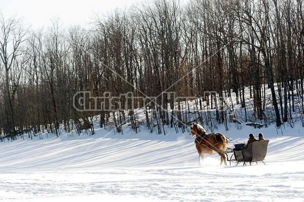 Single Horse Sleigh Ride