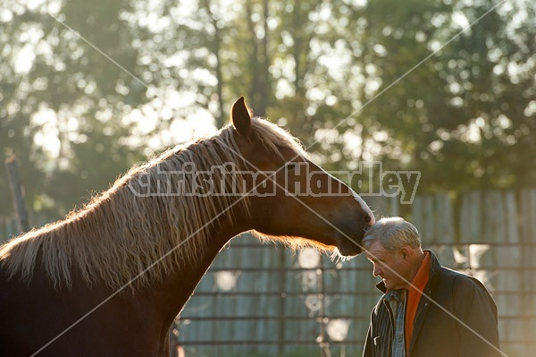 Man and Belgian draft horse