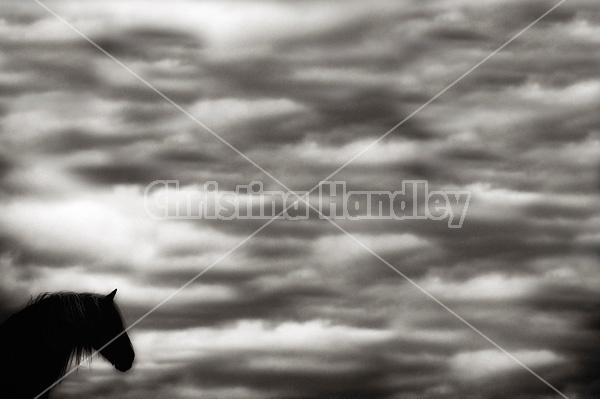Horse against big sky background
