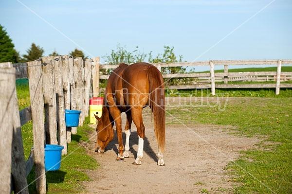 quarter horse in paddock