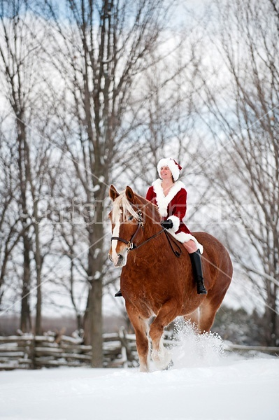 Mrs. Claus riding a Belgian draft horse bareback