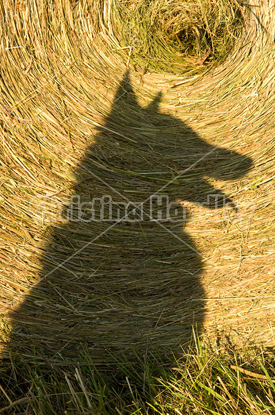 Shadow of dog against round bale of hay