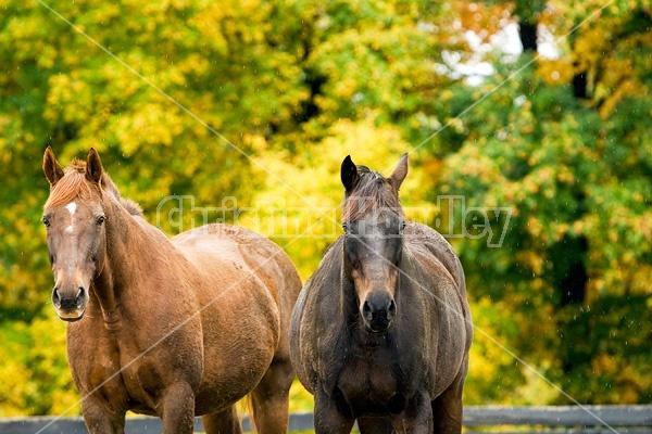 Horse on autumn pasture