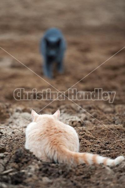 Orange cat laying in wait