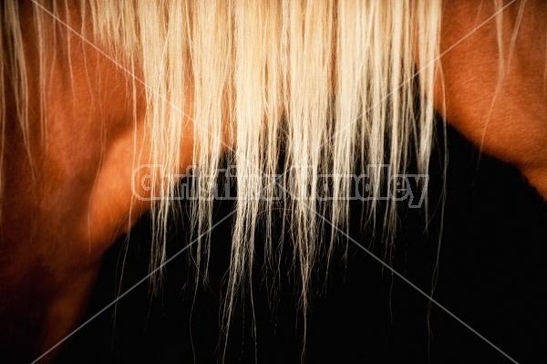 Close-up photo of blonde horse mane