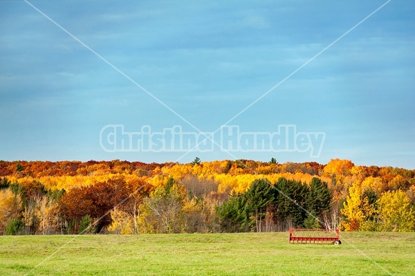 Autumn colored trees, field and sky