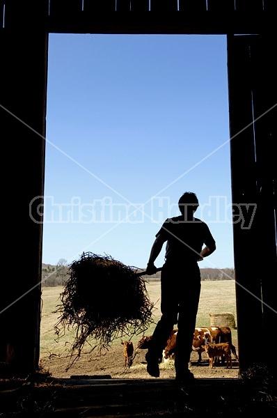 Farm woman silhouetted in barn doorway