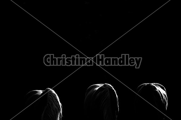 Three horses photographed in black and white backlit by setting sun