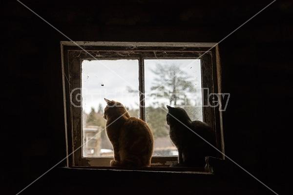 Two cats sitting in barn window