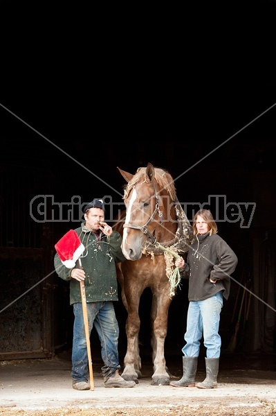 Husband and wife posing with a Belgian draft horse with a pitch fork and Santa hat.