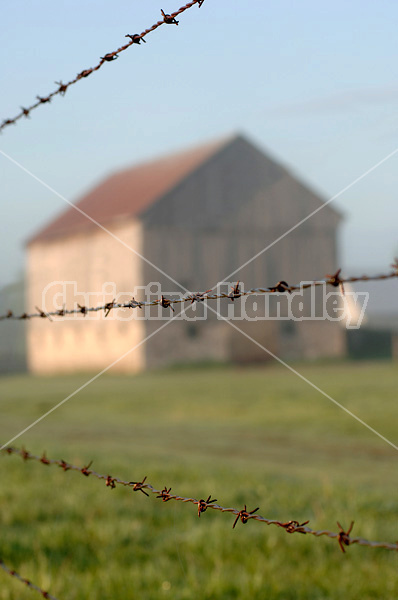 Barbed wire fence on cedar posts with out of focus barn in the background