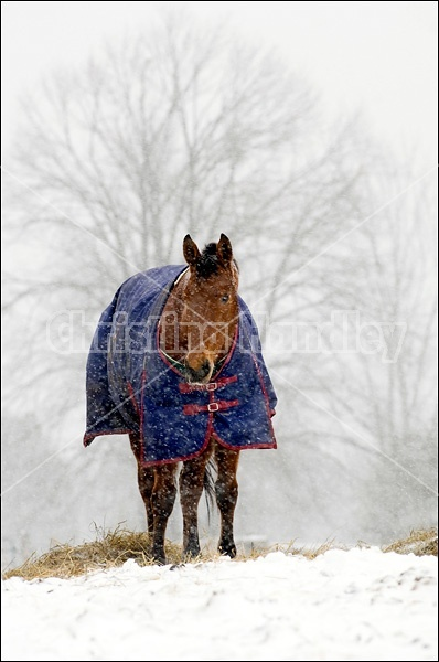 Horses wearing winter blankets outside in a snowstorm.