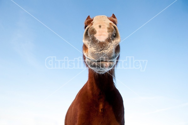 One horse photographed from a very low angle against a bright blue sky.