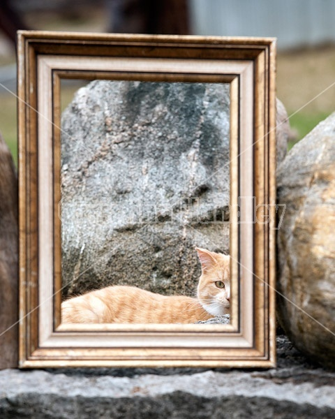 Looking at a cat through a picture frame that is sitting in the garden