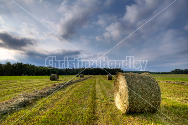 Round bale of hay in field