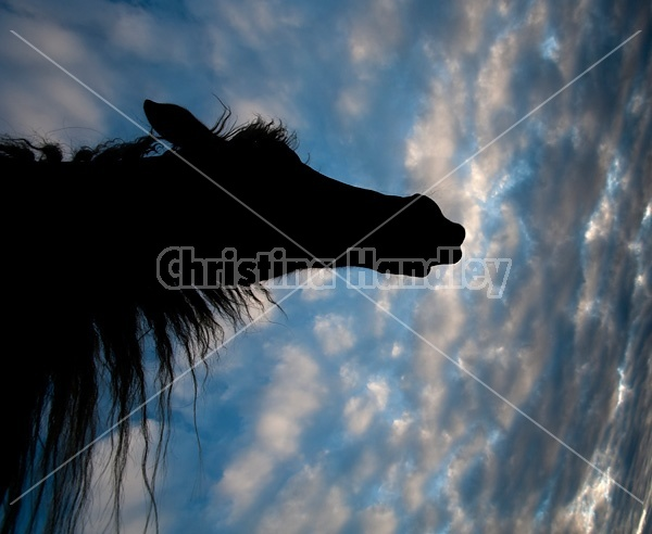 Horse head silhouette against sky
