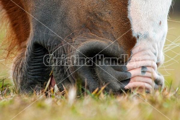 Close-up photo of a horse muzzle