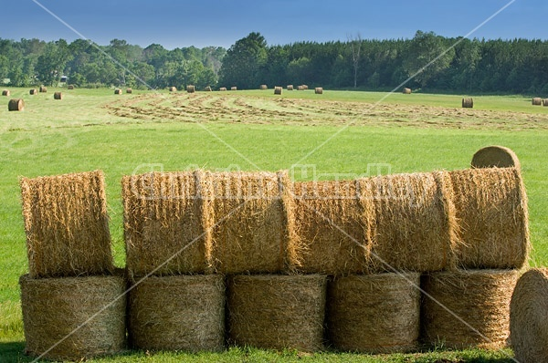 Round bales of hay piled up for winter storage