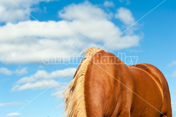 Photo of horses back, withers and neck photographed against a cloud filled blue sky