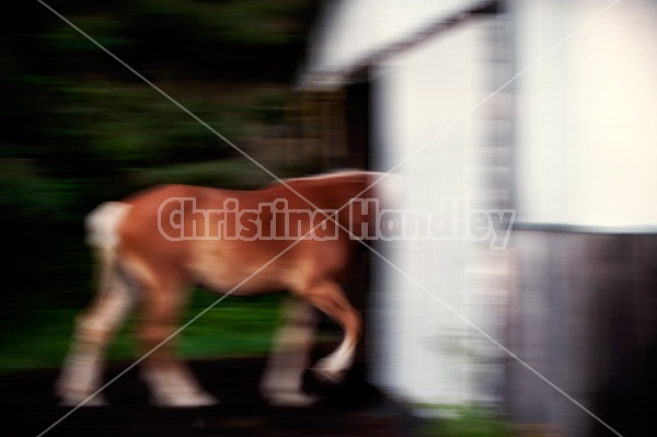 Horses photographed with slow shutter speed to create motion blur and imply movement