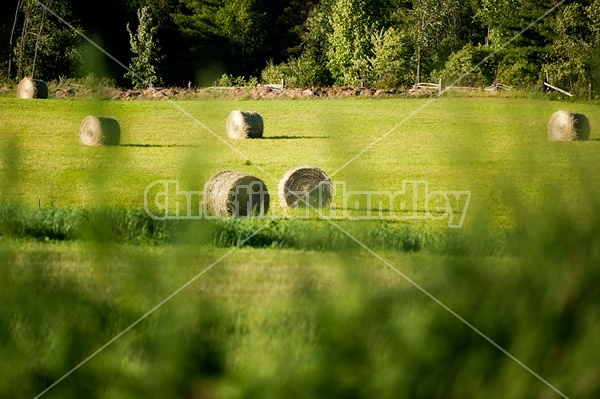 Round bales of hay sitting in field