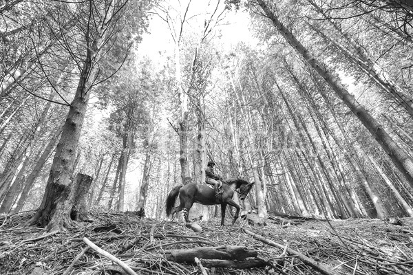Woman horseback riding in cedar forest