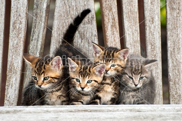 Young baby kittens on wooden bench