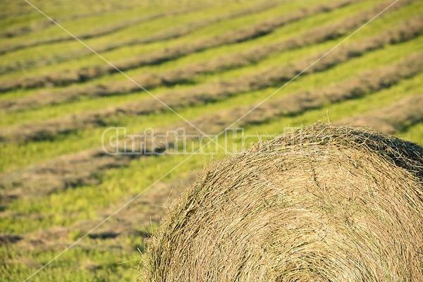 Making round bales of hay
