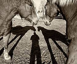 Shadow of person and horses