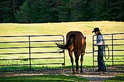Young woman putting horse back in paddock