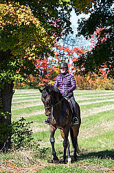 Woman horseback riding in field in the autumn of the year with colored leaves in the background