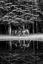 Young woman trail riding next to pond