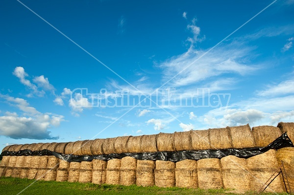 Round bales of hay stored for the winter in long rows