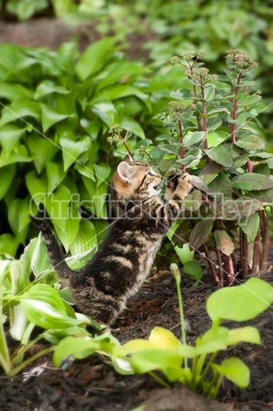 Young baby kitten in garden