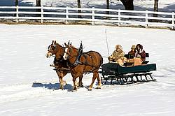 Horse drawn sleigh ride