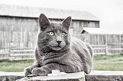 Barn cat sitting outside on cattle feeder