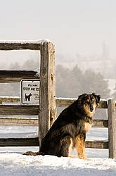 Black and brown farm dog sitting beside a poop and scoop sign on a winter morning.