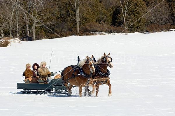 Horse drawn sleigh ride
