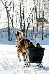 Single Horse Sleigh Ride