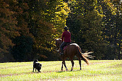 Woman riding chestnut horse in the autumn time