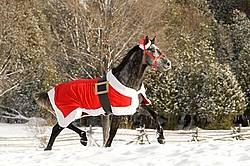 Gray horse wearing Santa Suit