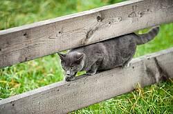Gray cat walking on board fence
