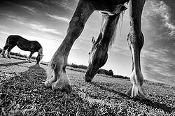 Funky wide angle photo taken from underneath this horse.