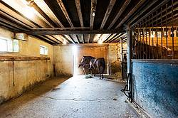 Mare and newborn foal loose in barn aisle