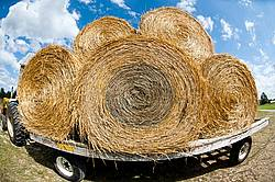Loaded hay wagon with round bales of oat straw