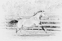 Pencil sketch digital art of horse running around paddock