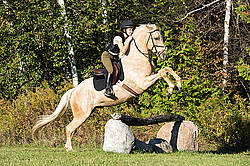 Young woman riding palomino horse over cross country jumps
